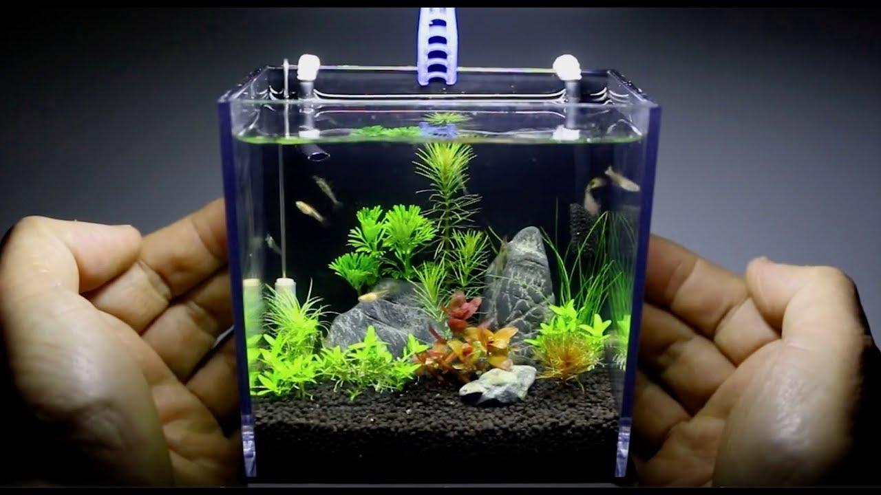 Bể cá mini thủy sinh siêu dễ thương